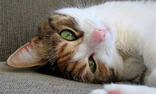 10 טיפים לגידול חתולים בריאים ומאושרים