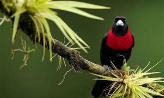 צפו בסדרת תמונות מרהיבה של 18 צילומי ציפורים