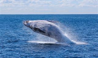 14 עובדות מרתקות ומפתיעות על לווייתנים