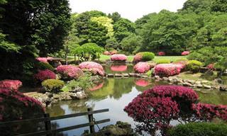 אתרי טיולים מומלצים בטוקיו