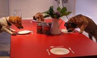 מסעדת כלבים נפתחה בלונדוןהמסעדה של לילי אולי לא הראשונה מסוגה בעולם, אבל היא בהחלט מהמגניבות שבהן. הכלבים מקבלים מזון בחינם, נהנים מליטופים ויחס אוהב ואף זוכים להקראת סיפור.מה עוד אפשר לבקש?