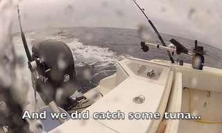 מפגש אקראי עם להקת דולפינים!