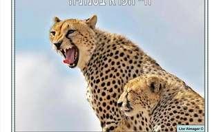 בעלי החיים המדהימים של אפריקה