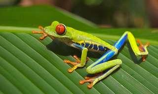 משל הצפרדעים - תמיד להיות חיוביים!