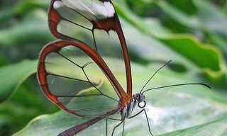 פרפרים מדהימים ונדירים בסכנת הכחדה