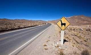 מסע מצולם לאורך הכביש הפאן–אמריקאי