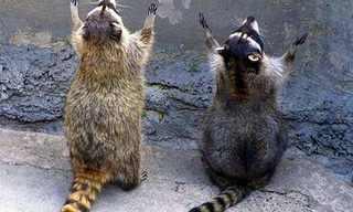 """תמונות מצחיקות של בעלי חיים """"מתפללים"""""""