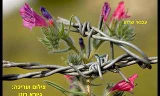 תמונות נפלאות של פרחים בישראל