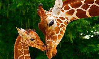 18 חיות שיהפכו את היום שלכם לכתום במיוחד!