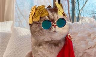 מחתול רחוב לכוכב רשת - הכירו את בנסון החתול