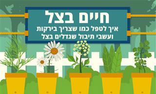 איך לטפל כמו שצריך בירקות ועשבי תיבול שגדלים בצל