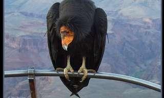 מלכי השמים - העופות הדורסים במלוא הדרם