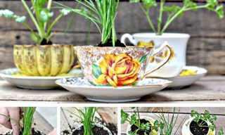 עיצובים נפלאים עם ספלי תה