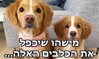 סדרת תמונת מקסימה של גורי כלבים שדומים להורים שלהם