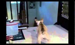חתול וכלב בחילופי תפקידים - מצחיק!