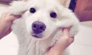 16 תמונות נפלאות שמציגות את היופי של כלבים מעורבים