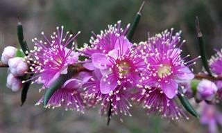 סוגי פרחים מרהיבים שתשמחו לגלות עליהם פרטים מעניינים