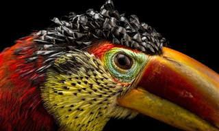 18 תמונות יפות מאוד של חיות נדירות