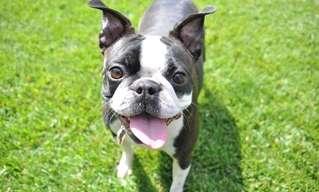 6 בעיות הבריאות הנפוצות אצל כלבים