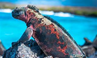 סרטון מרהיב ומרתק מהטבע של איי גלפגוס ומהעיר קיטו