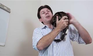 איך להחזיק חתול מבלי שינסה לברוח?