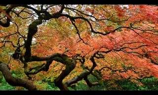 השקט והיופי המרהיב של הגנים היפנים בפורטלנד
