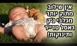 אוסף קטעים מתוקים של כלבי ג'ק ראסל טרייר ותינוקות משחקים ומשתובבים ביחד