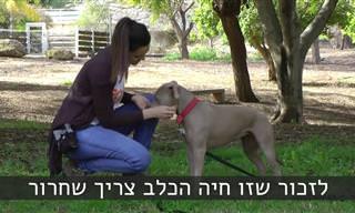 10 טיפים לאילוף חכם, יעיל ומהנה של הכלב שלכם