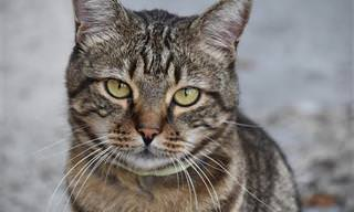10 סימנים למחלת הסרטן אצל חתולים