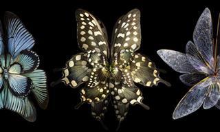 כנפיהם של הפרפרים המיוחדים האלה הופכות אותם לפרחים מדהימים