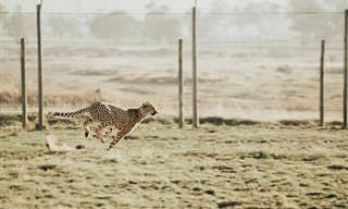 אלו הם בעלי החיים המהירים ביותר בעולם