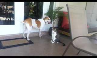 חיות נדיבות שעוזרות אחת לשנייה