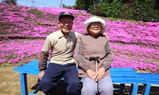 הבעל האוהב הזה גידל במשך שנתיים גינה פורחת כדי לשמח את אשתו העיוורת