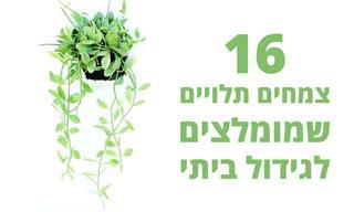 16 צמחים תלויים שמומלץ לגדל בבית