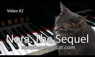 חתולה מנגנת בפסנתר - מקסים!