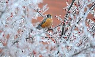 החורף במלוא הדרו - תמונות מדהימות