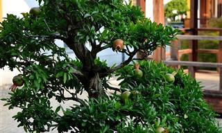 מדריך לגידול 8 עצי פרי שונים בגינה או במרפסת