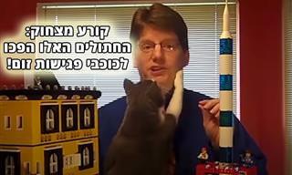 אוסף מצחיק של חתולים מפריעים לעבודה מהבית ולעוד כמה אירועים