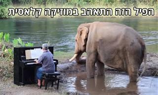 פסנתרן מנגן יצירות קלאסיות לפילים – פרויקט מקסים שידהים אתכם!