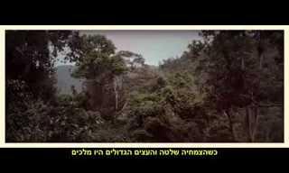 טיול מדהים ביערות העד של מאלזיה