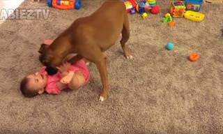 סרטון חמוד על תינוקות וכלבים