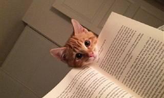 21 הוכחות לכך שלחתולים יש היגיון יוצא דופן