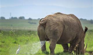 17 תמונות משעשעות של בעלי חיים שובבים במיוחד