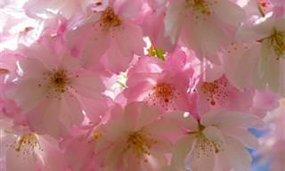 המשמעויות שמאחורי 14 מהפרחים האהובים ביותר
