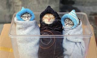 15 גורי חתולים חמודים במיוחד