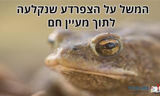 המשל על הצפרדע שנקלעה לתוך מעיין חם