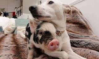 משפחה שכזאת: כלבה, חתול ושישה חזירונים חולקים בית אחד