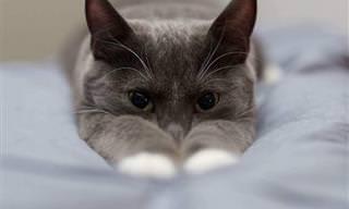 14 תמונות חמודות של בעלי חיים שיחממו לכם את הלב