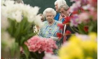 תמונות מתערוכת הפרחים של צ'לסי