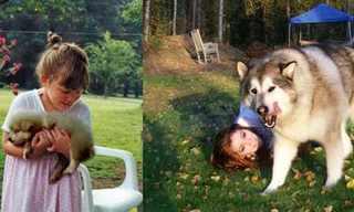 חברים משכבר הימים - כלבים מדהימים!